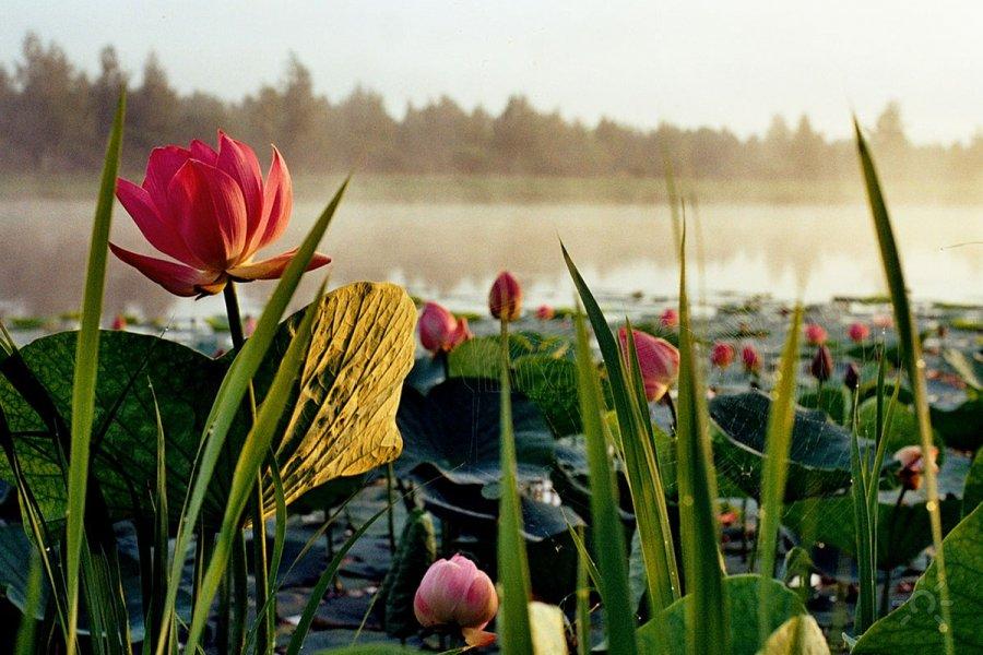 Цветы возле водоема