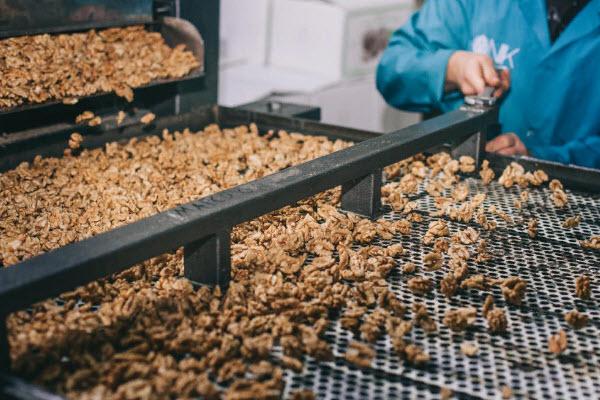 Сортировка лущенного грецкого ореха на производстве