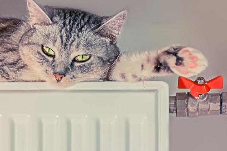 Кот на батарее отопления