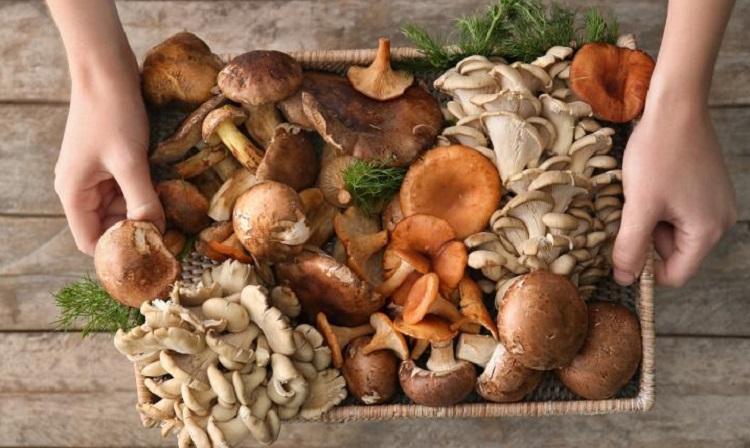 Разные виды грибов в контейнере
