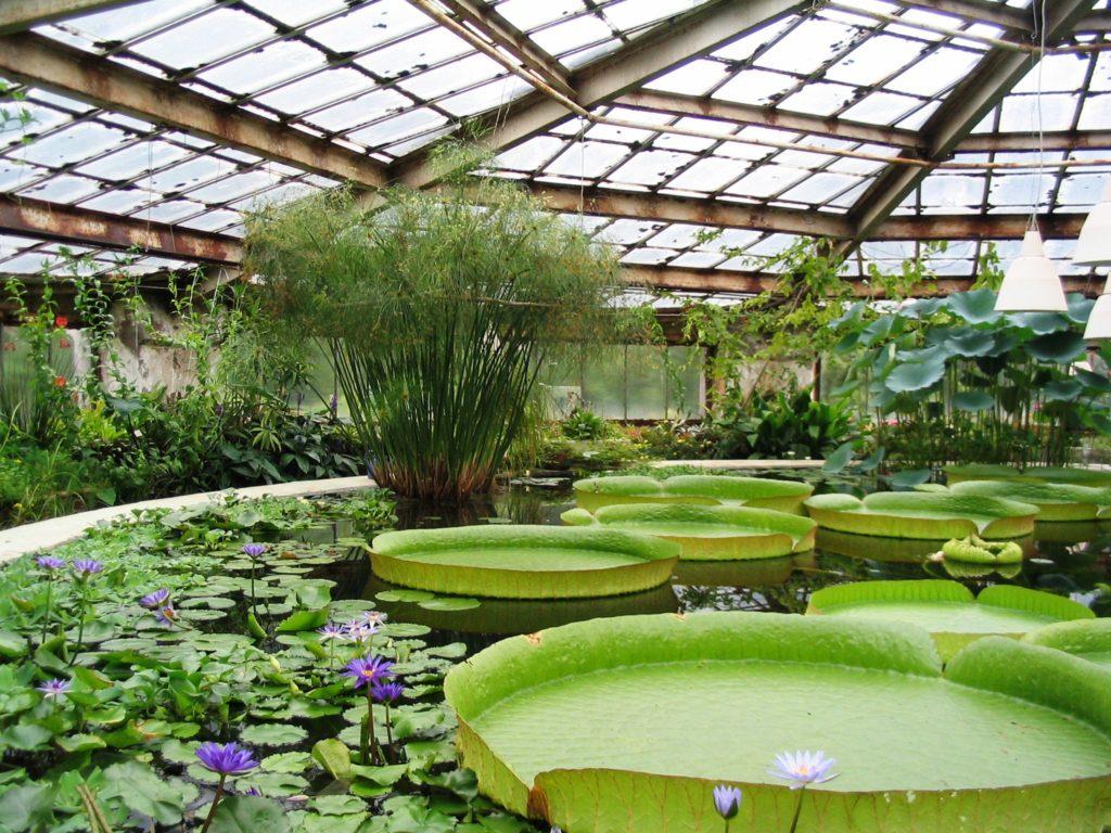 В Московском ботаническом саду