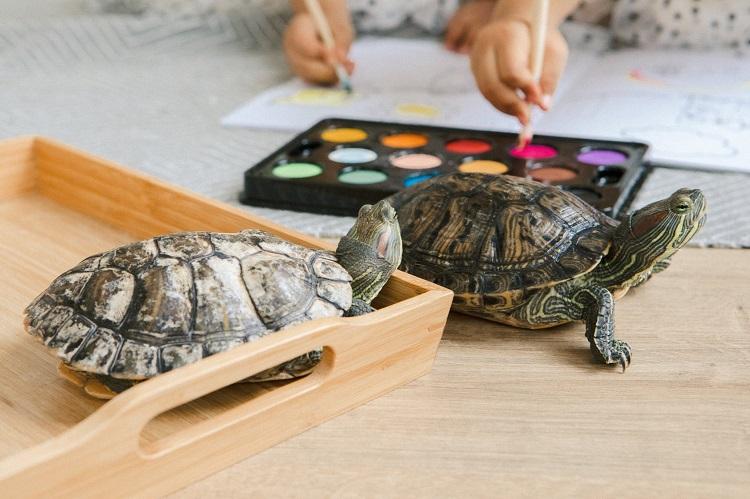 Черепахи на столе и краски