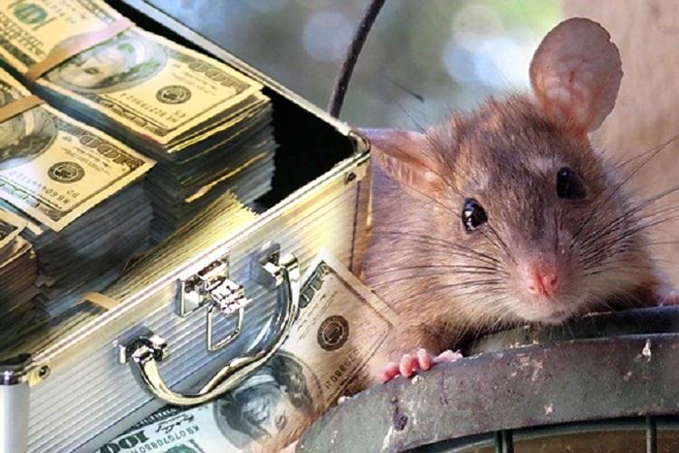 Мышь и шкатулка с деньгами